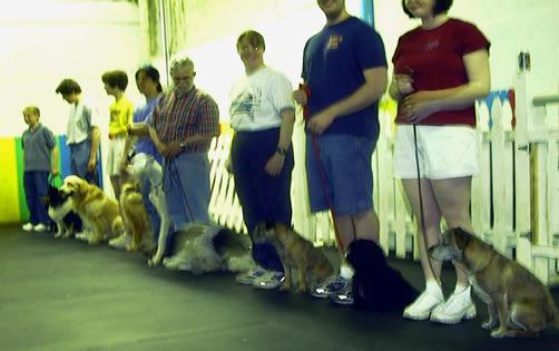 North Shore Dog Training Club Il