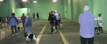 North Shore Dog Training Club